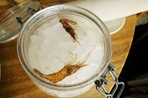 Shrimps aus dem Roskildefjord wurden uns angetragen. Und zwar lebendig. Kreisch!