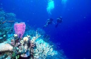 Belize ist wie geschaffen für Öko-Tourismus. Ob Treks in dichten Wäldern oder Pferdewandern im bergig-grünen Ignacio. Und dann gibt es da auch noch einen der größten Korallengärten.