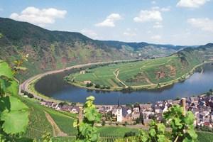 In der Moselschleife bei Bremm wollen die Winzer neben dem Wein auch Biomasse liefern.