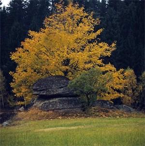 Ein häufiges Phänomen in Bayern und Österreich sind seltsam figurierte Felsen.