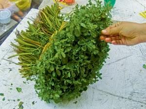 ...Ziegenfrischkäse mit der saftigen Grünpflanze Portulak...