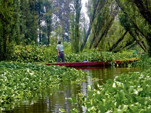 Die schwimmenden Gärten von Xochimilco versorgen Mexiko-Stadt mit Gemüse.