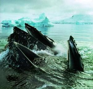 Dies ist die Folge des Klimawandels, der für die neue Welt am Polar auch Schwierigkeiten bringen kann.