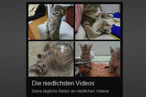 Google startet YouTube Slam (alias Katzen-Video-Overkill)