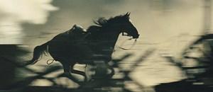 "Geschundene Kreatur zwischen den wüsten Weltkriegs-Fronten an der Somme: Steven Spielbergs ""War Horse"" Joey."