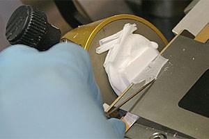 Gefrierschnitt: Das im gefrorenen Gel eingeschlossene organische Gewebe wird mit einem Mikrotom in Scheiben geschnitten und auf einem Glasplättchen platziert.