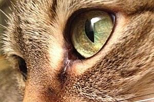 Drei Katzen wurden in den vergangenen Wochen mit einer Schrottflinte angeschossen.