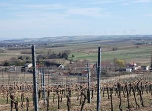 Idyllische Weinberge im nördlichen Weinviertel.