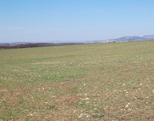 Auf diesem Feld mit Blick Richtung Tschechien hätte der erste 60 Meter hohe Bohrturm errichtet werden sollen.