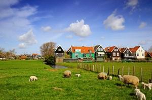 Das Naturprodukt Schafwolle ist mittlerweile zu einem begehrten Dämmstoff geworden.