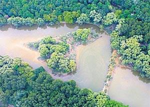 Die Donauauen, in den 1980ern noch verödet, verwandeln sich durch Renaturisierung wieder in Naturparadiese.