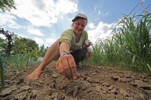Im Schau- und Vermehrungsgarten der Arche Noah und in vielen Partnergärten werden sie angepflanzt, getestet und die Samen vermehrt.