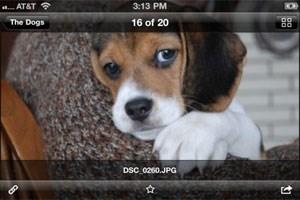 Dropbox-User können nun auch unter iOS ihre Fotos und Videos automatisch hochladen lassen.