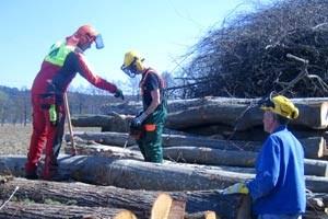 """Seit 1. April sind sechs Männer beim """"Sozialen Biomassehof Raabtal"""" beschäftigt."""