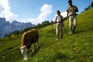 Mehr als 200 Stück Vieh verbrinen die Sommerzeit auf den freien Flächen.