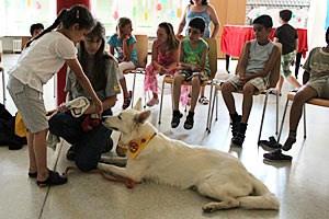 Elisabeth Mannsberger und ihr Hund Daily besuchen regelmäßig Volksschulen und Kindergärten, um den sicheren Umgang mit Vierbeinern zu vermitteln. Regel Nummer eins: Nie auf einen Hund zustürmen, zuerst den Besitzer fragen und dann das Tier an der Hand schnüffeln lassen.