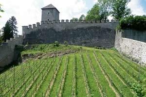 Wo der Wein wächst: Seit ein paar Jahren auch mitten in der Stadt Salzburg, auf dem Mönchsberg. Und kein schlechter noch dazu!