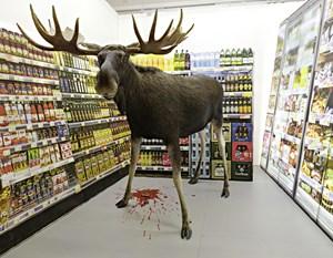 Als der in Norwegen erlegte Elch geliefert wurde, fiel das Grillen aus: Geliefert wurde nur die Paarhuf-Hülle ohne Fleisch.