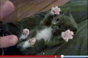 Was wäre das Web ohne Katzencontent?