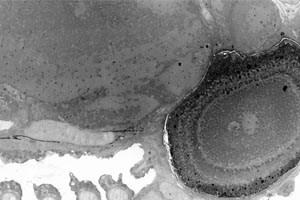 Wissenschaftler entwickeln Photo Stitcher für Aufnahmen aus dem Elektronenmikroskop.