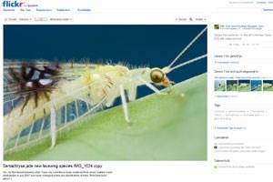 Fotos auf Flickr haben zur Entdeckung einer neuen Insektenspezies geführt.