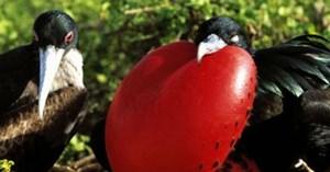 """""""Terra Mater - Galápagos"""" auf Servus TV, mehr dazu hier."""