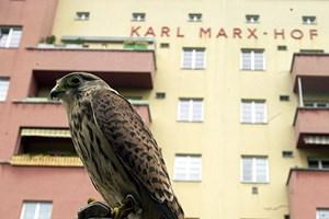 Die Wildtiere können dem Menschen auch nutzen. Greifvögel wie Turmfalken werden etwa zur Vertreibung von Tauben eingesetzt, wenn deren Population zu Schäden führt.