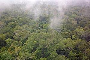 Wir sind nicht die einzige Spezies, die beim Klima mitmischt: Feuchtigkeit kondensiert über dem Regenwald um winzige Partikel herum, die von Pflanzen und Pilzen freigesetzt wurden.