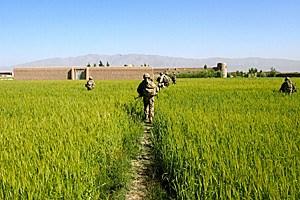 US-Truppen auf Patrouille: Auf ihre afghanischen Kameraden können sie sich nach Jahren noch immer nicht verlassen.