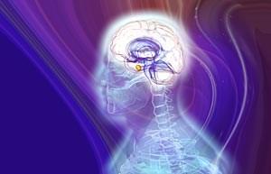 Das Limbische System spielt eine wesentliche Rolle bei der Entstehung von Emotionen.