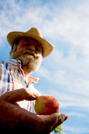 Karl Groll züchtet seine Pfirsichbäume aus den Kernen.