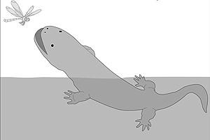 Riesensalamander sind heute nur mehr im Wasser anzutreffen, während ihre Vorfahren vor rund 56 Millionen Jahren auch das Land zu ihrem Revier gemacht haben.