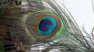 Foto mit dem Xperia T aufgenommen - hier der Link zur unkomprimierten Original-Aufnahme.