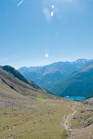In einem endlos scheinenden Zug wandern tausende Schafe im Gänsemarsch über den Alpenhauptkamm.