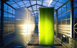 """Die Mikroalgenzuchtanlage """"Hanging Gardens"""" in Bruck an der Leitha soll mithilfe von Sonnenenergie zu einer alternativen Energiequelle der Zukunft werden. 22 Tanks stehen auf 500 m2."""