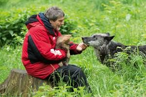 Verhaltensbiologe Kurt Kotrschal leitet gemeinsam mit Frederike Range und Zsófia Virányi das Wolfsforschungszentrum in Ernstbrunn.