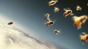 Bienen sind auch im Flug erstaunlich gut organisiert - Markus Imhoofs Dokumentarfilm begleitet sie nicht nur dabei.