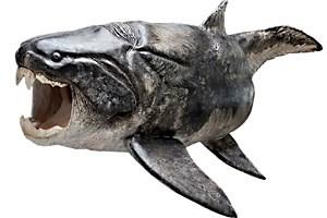 Bereits die urzeitlichen Panzerfische hatten Zähne - hier ein Dunkleosteus. Eine virtuelle Kiefer-Sektion seines Verwandten Compagopiscis (unten) zeigt eine Zahnreihe und Wachstumslinien.