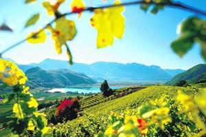 Hier entlang geht's ins Paradeis: Blick auf den Kalterer See, gleich dahinter liegt Alois Lageders Wein- und Genussgut.www.laurin.itwww.greif.itwww.aloislageder.euwww.pfoshof.com