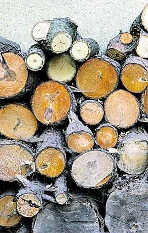 Materialwissenschaft forscht an feuerfesterem Holz.