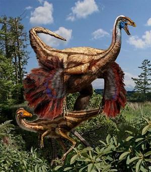 Ornithomimus edmontonicus - hier eine Rekonstruktion - ist der erste gefiederte Dinosaurier in der westlichen Hemisphäre. Möglicherweise dienten ihm seine Federn für die Balz.