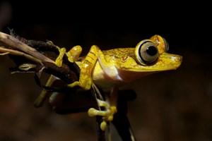 Die Nebelwälder Ecuadors zählen weltweit zu den Regionen mit der höchsten Artenvielfalt.