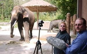 """Koshik im Everland-Zoo beim """"Interview"""" mit den Wissenschaftern Angela Stöger und Daniel Mietchen."""