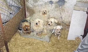Die Muttertiere leben in Kellern oder Käfigen.