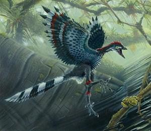 Der Ur-Vogel Archaeopteryx beherrschte bereits den Flug, doch seine noch recht primitiven Flügel erschwerten vermutlich den Start und das langsame Fliegen.