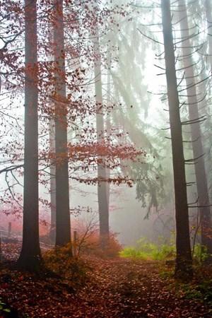 An sich eignet die feuchte und nebelige Po-Ebene sich gar nicht für die Lufttrocknung edlen Schinkens.