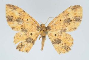 ... und das mehr als 100 Jahre alte Typenexemplar aus dem Natural History Museum in London.
