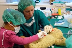Einführung in die Anatomie: Ein Teddybär, bei dem sich der Bauch öffnen lässt und die Organe herausgenommen werden können.