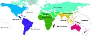 Die Farbgebung dieser Weltkarte ist nicht zufällig gewählt: Je näher die Farben im Spektrum beieinander stehen, desto ähnlicher sind sich die betreffenden Regionen auch in ihren jeweiligen Faunen.