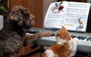 Wer sich puncto Haustierhaltung oder Lärmbeeinträchtigung unsicher ist, findet im Mietrechtsgesetz klare Regelungen.